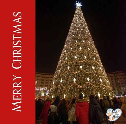 Urban Christmas Tree photo, Merry Christmas photo