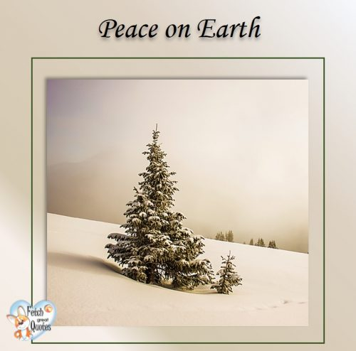 Clean design winter holiday photo, Evergreen tree in the snow, White Christmas, Peace on earth