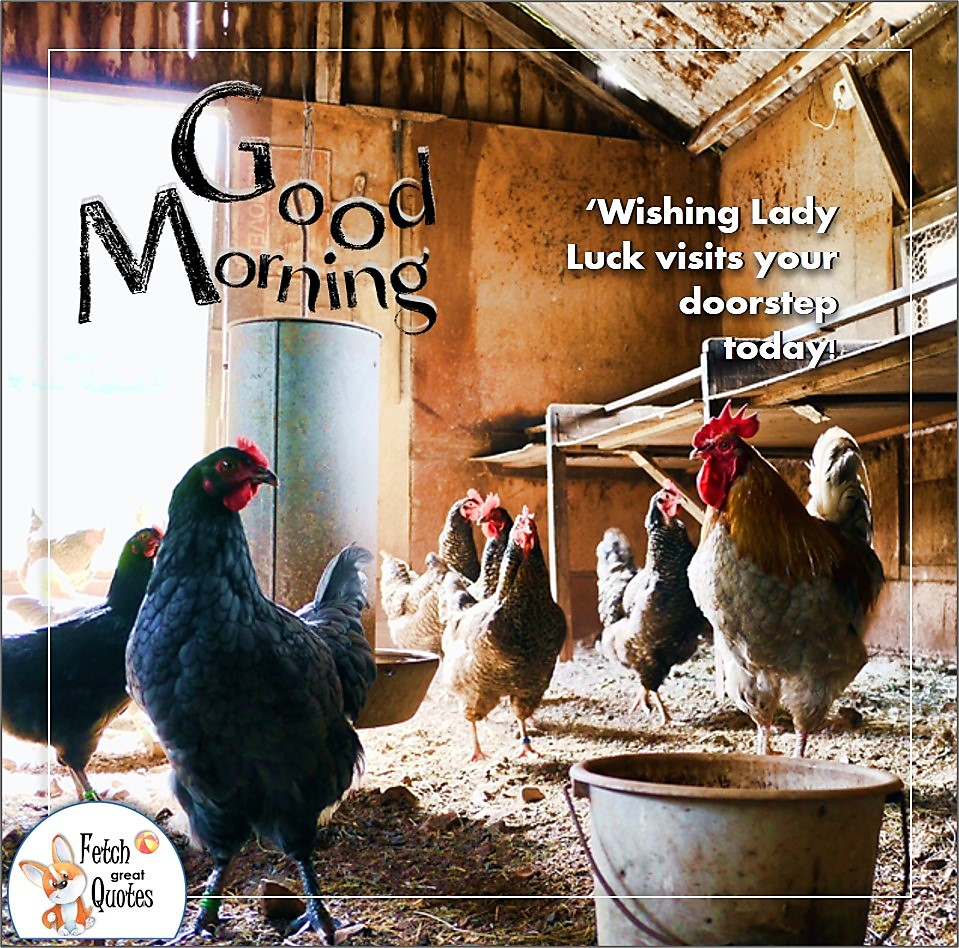 chicken coop, Wishing Lady Luck visits your doorstep today!, chicken farm, Country Morning, Good Morning, Country Good Morning, sunny morning, , good morning blessings, Country blessing, Good morning wishes, free country good morning photos, countryside photos,country girl morning, Country blessing, American country, down country, American country