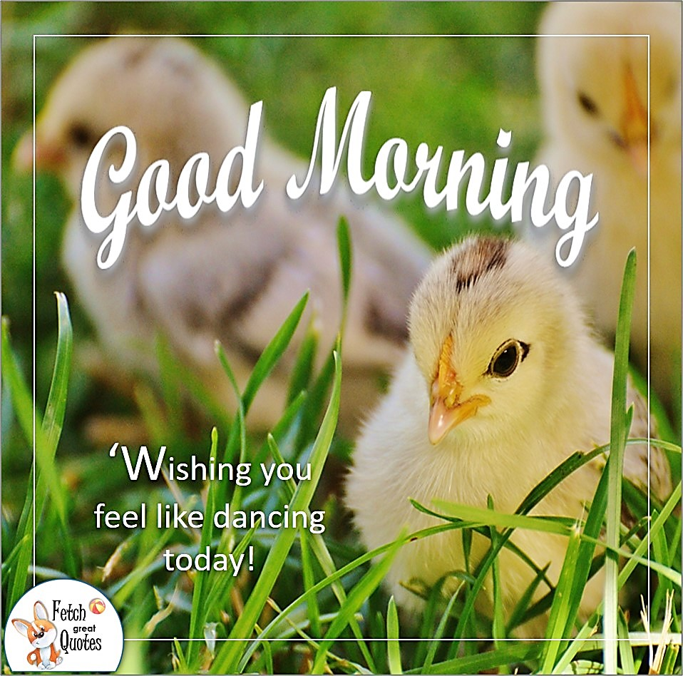 baby chicks, yellow chicks, easter chicks, wishing you feel like dancing today, Country Morning, Good Morning, Country Good Morning, sunny morning, , good morning blessings, Country blessing, Good morning wishes, free country good morning photos, countryside photos,country girl morning, Country blessing, American country, down country, American country