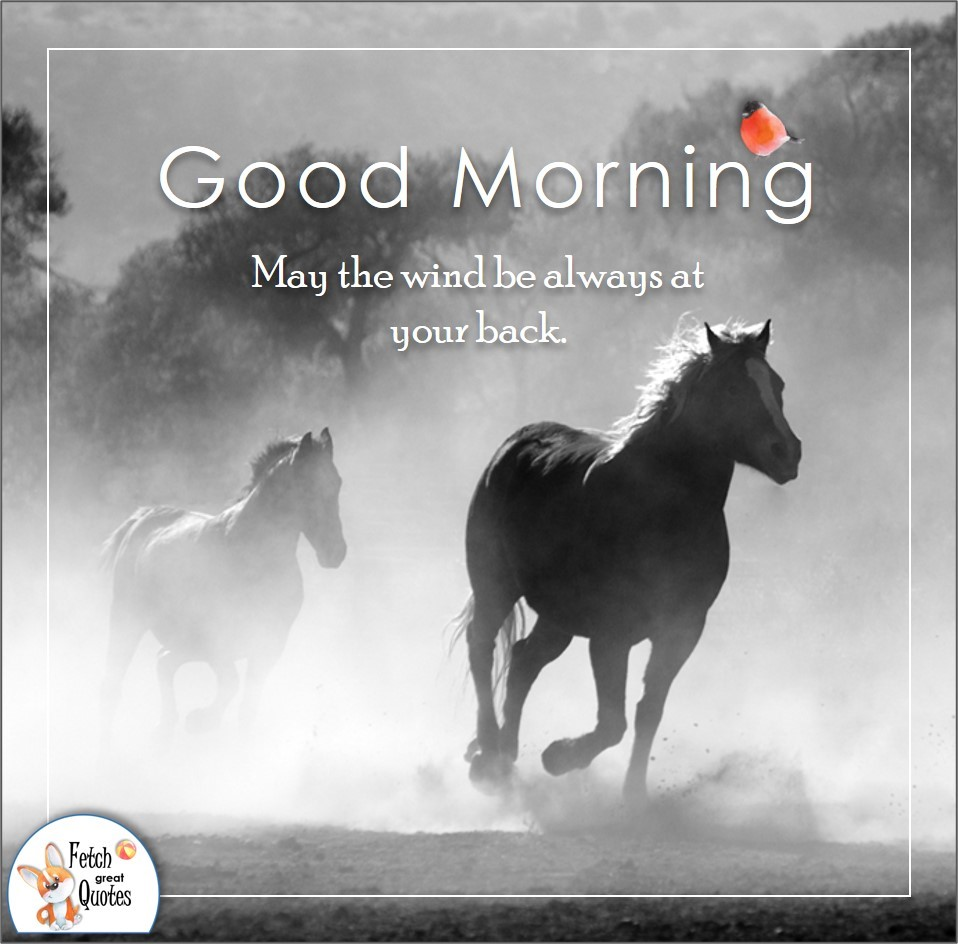 black and white photo, wild horses, May the wind be always at your back, horse ranch, Country Morning, Good Morning, Country Good Morning, sunny morning, , good morning blessings, Country blessing, Good morning wishes, free country good morning photos, countryside photos,country girl morning, Country blessing, American country, down country, American country