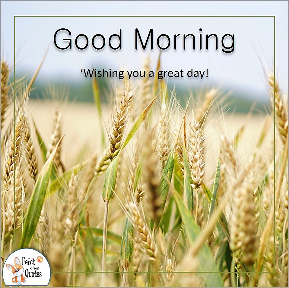 Wishing you a great day, wheat field, grains of wheat, Country Morning, Good Morning, Country Good Morning, sunny morning, , good morning blessings, Country blessing, Good morning wishes, free country good morning photos, countryside photos,country girl morning, Country blessing, American country, down country, American country,