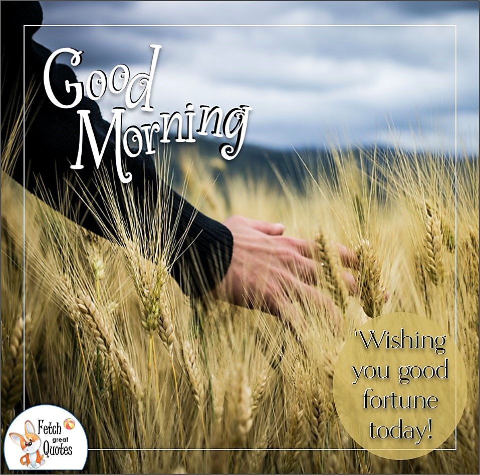 country life, wheat field, walk outside, Wishing you good fortune today, Country Morning, Good Morning, Country Good Morning, sunny morning, , good morning blessings, Country blessing, Good morning wishes, free country good morning photos, countryside photos,country girl morning, Country blessing, American country, down country, American country,
