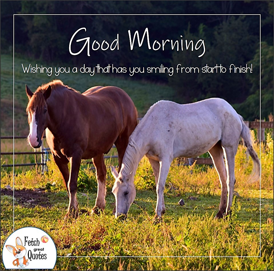 Wishing you a day that has you smiling from start to finish!, two horses, white horse, sunrise, brown horse, horse ranch, ranch life, Country Morning, Good Morning, Country Good Morning, sunny morning, , good morning blessings, Country blessing, Good morning wishes, free country good morning photos, countryside photos,country girl morning, Country blessing, American country, down country, American country