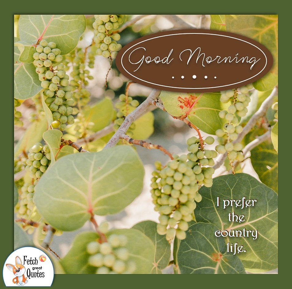 grapes, grapevine, grape orchard, wine grapes, prefer the country life, Country Morning, Good Morning, Country Good Morning, sunny morning, , good morning blessings, Country blessing, Good morning wishes, free country good morning photos, countryside photos, Country blessing, American country, down country, American country