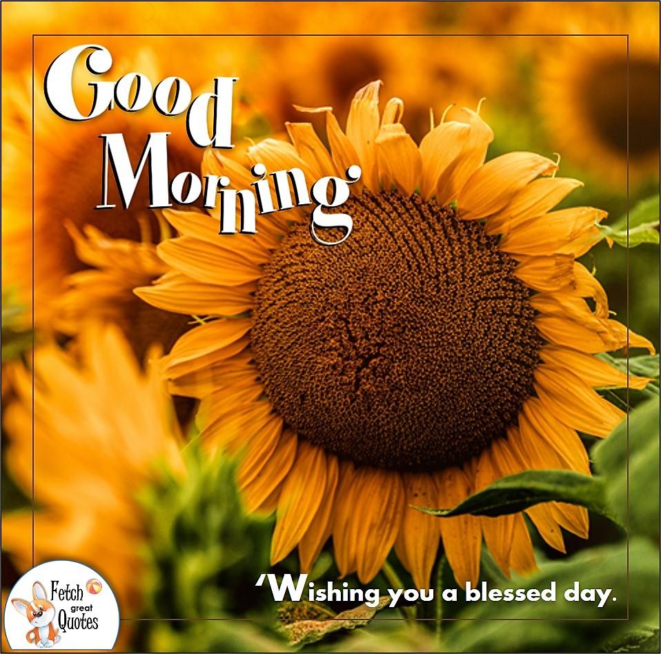 sunflower, sunny morning, sunrise, Wishing you a blessed day, Country Morning, Good Morning, Country Good Morning, sunny morning, , good morning blessings, Country blessing, Good morning wishes, free country good morning photos, countryside photos,