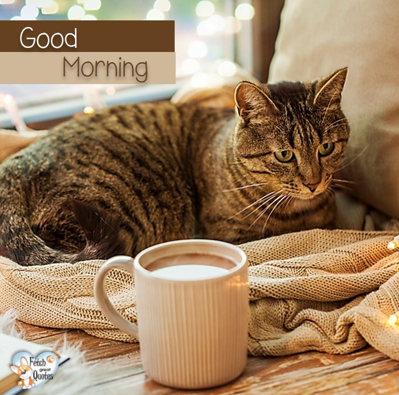 Good morning cat coffee, Good Morning photos, Good Morning Coffee photos, Coffee photos, Funny Coffee photos, humorous coffee photos, funny coffee sayings, coffee quotes, coffee lover, Coffee themed photos, coffee themed good morning photos
