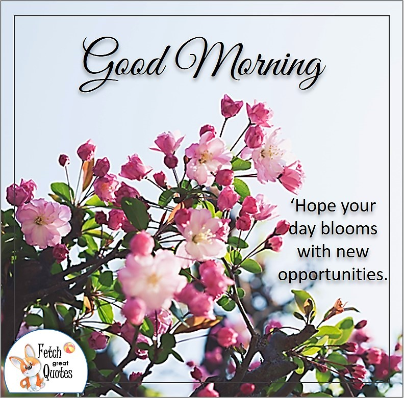 pink flowers, pink blossoms, Good morning photo, Hope you day blooms with new opportunities quote photo