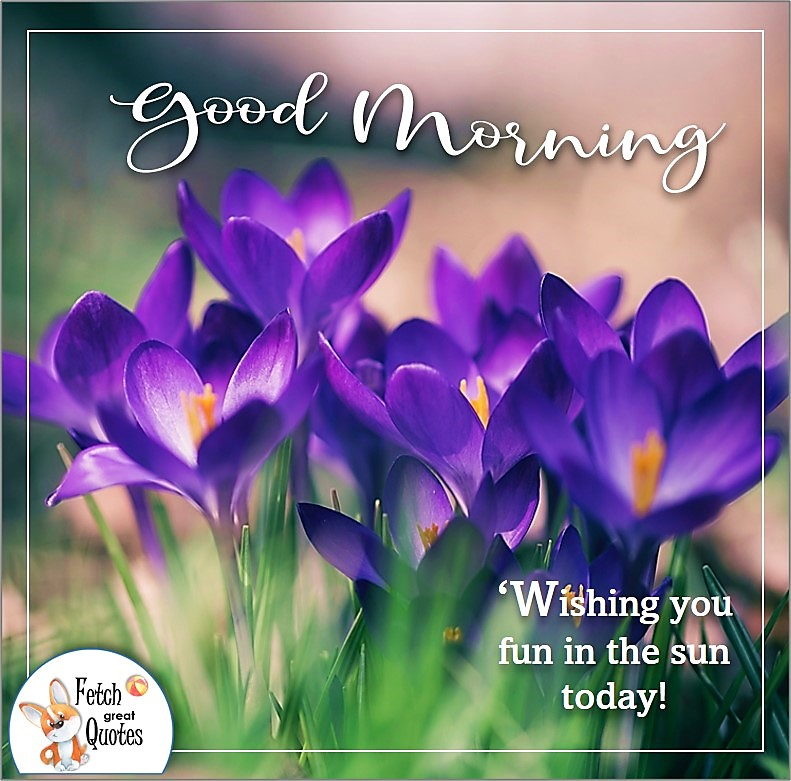 purple flowers, purple crocuses, spring flowers, spring good morning photo, Wishing you fun in the sun today photo quote