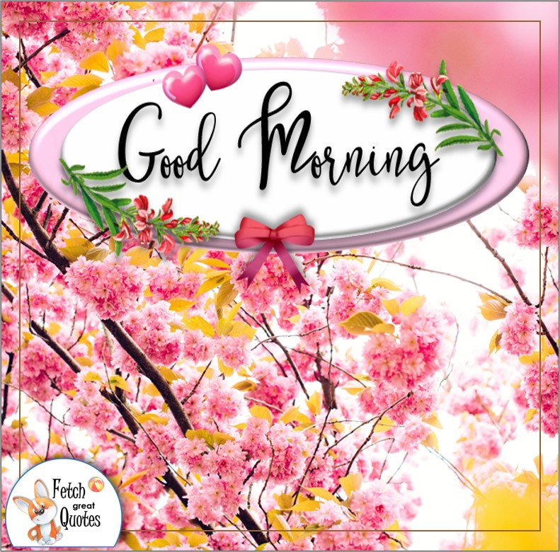 Spring flowers, pink flowers, pink blossoms, good morning photo