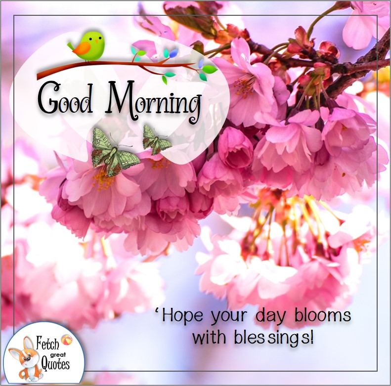 pink Spring blooms with blessings today quote photo morning photo, 'Hope your day blossoms with