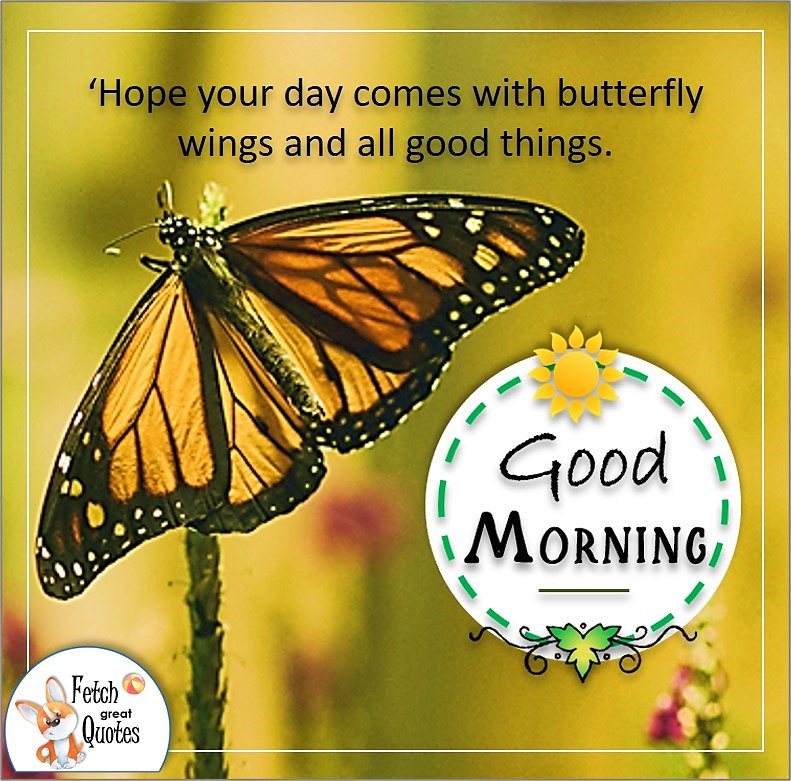 orange monarch butterfly good morning photo, 'Hope your day comes with butterfly wings and all good things. quote photo