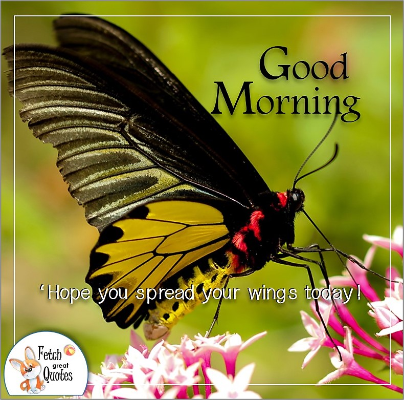 yellow butterfly good morning photo, Hope you spread your wings today! quote photo