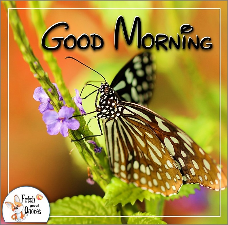monarch butterfly good morning quote photo