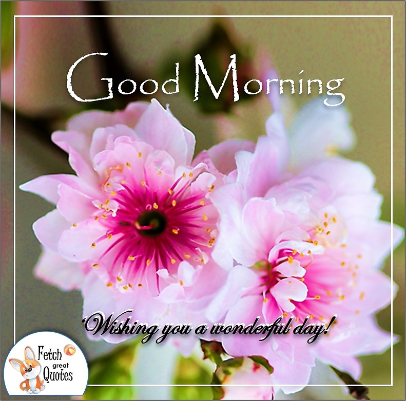 pretty pink flower good morning quote photo, Wishing you a wonderful day quote photo