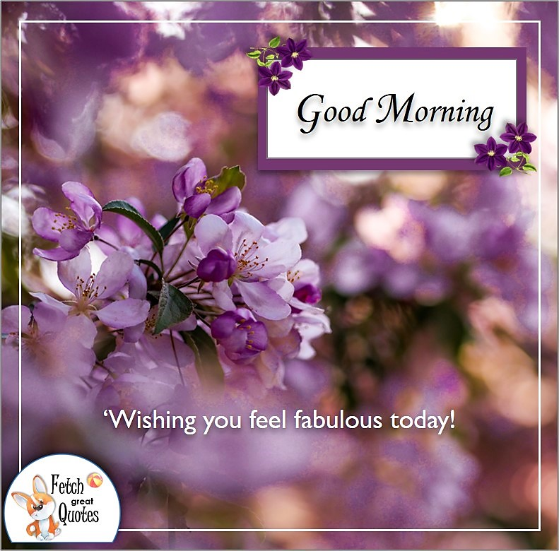 purple blossoms, purple flowers good morning quote photo, Wishing you feel fabulous today quote photo