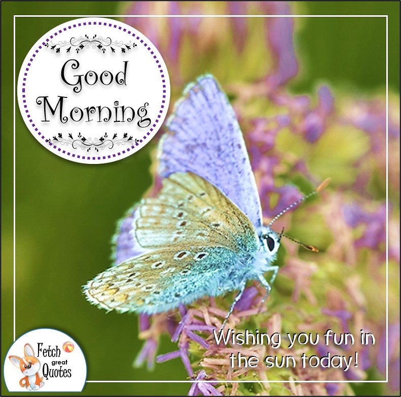 pastel butterfly good morning quote photo, Wishing you fun in the sun today quote photo