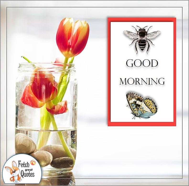 clean design tulip good morning quote photo