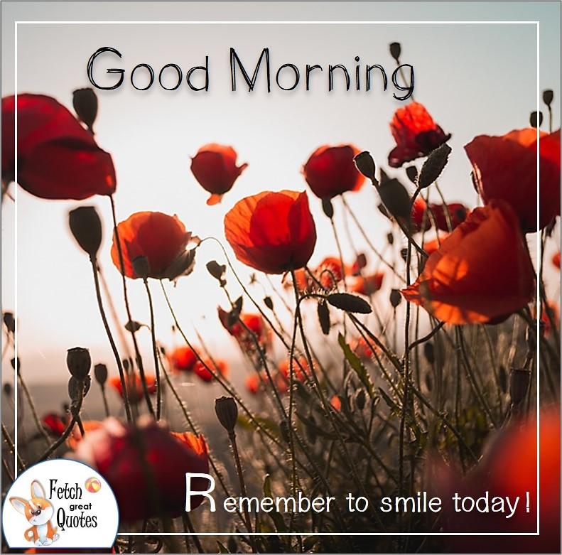 red poppy good morning photo quote, remember to smile photo quote