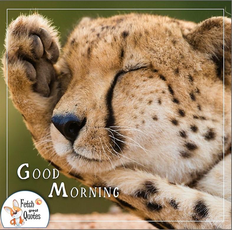 sleepy baby leopard good morning quote photo