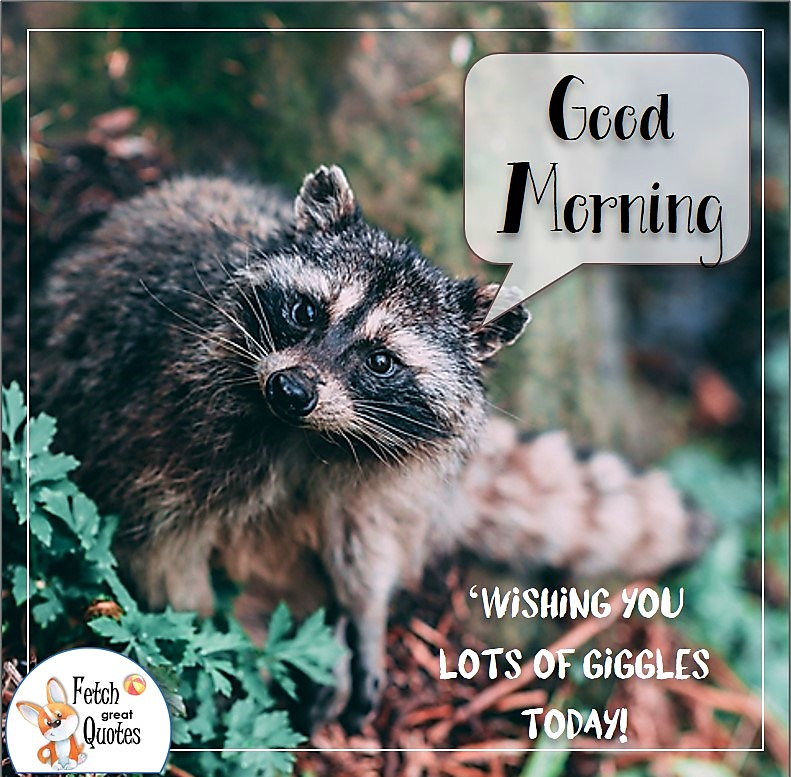 racoon good morning photo, forrest animal good morning photo, Wishing you lots of giggle today photo quote