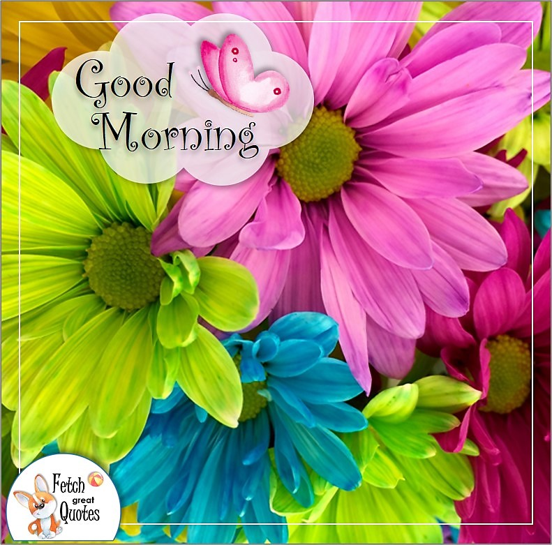 colorful daisy good morning photo quote, bright pink flower,