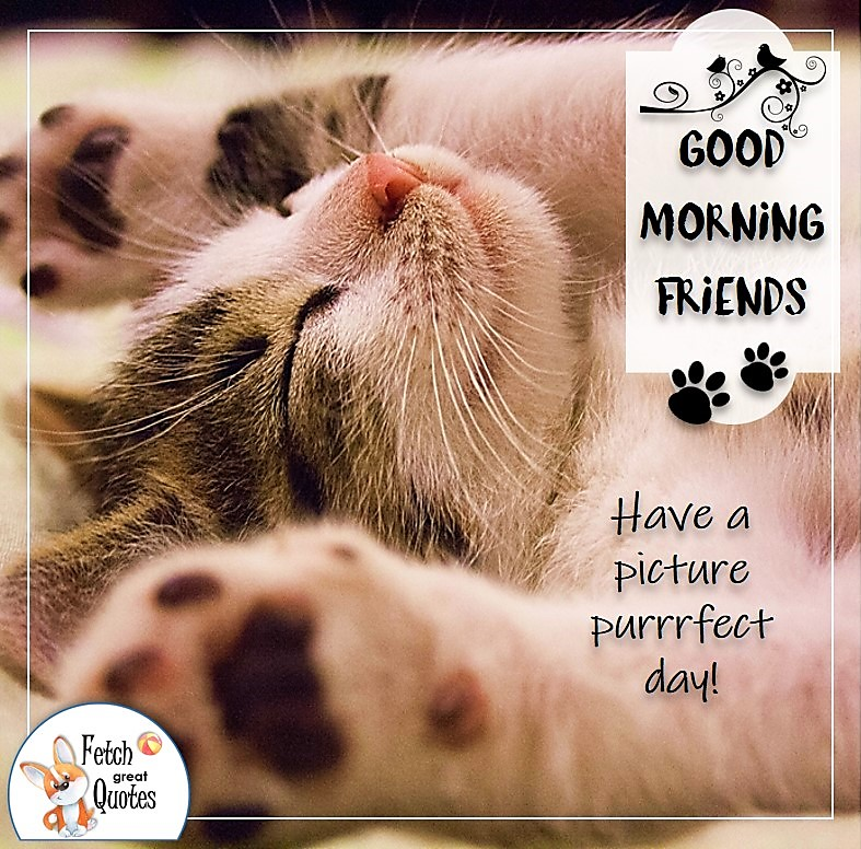sleeping kitty, sleeping cat, cat good morning photo quote, Have a picture purrfect day photo quote