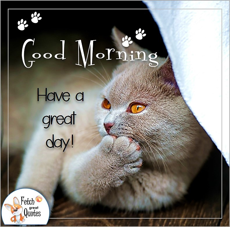 gray cat good morning photo quote, Have a nice day photo quote