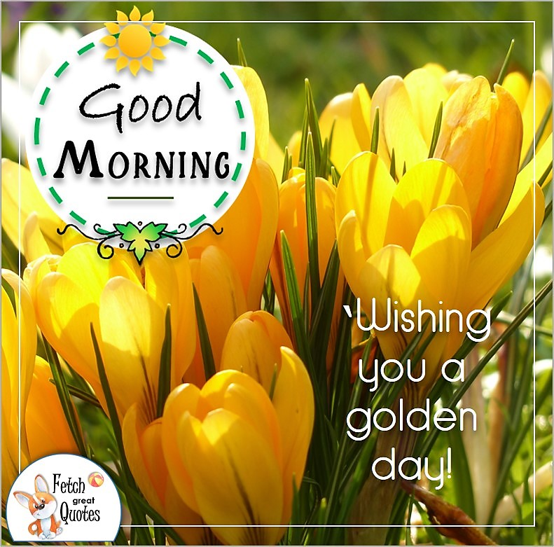 yellow crocuses, spring flowers, sunny good morning photo, Wishing you a golden day photo quote