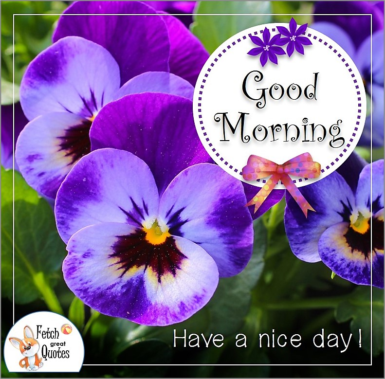 purple pansies good morning flowers photo, Have a nice day photo