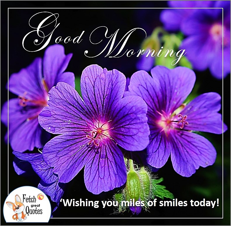purple flowers, purple violets Good morning photo, Wishing you miles of smiles today photo
