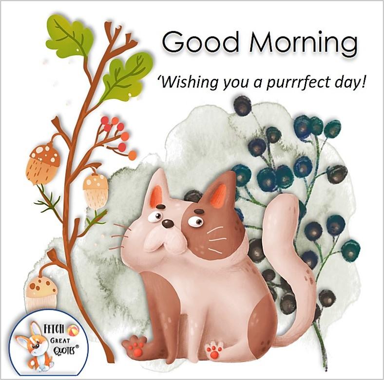 cute cat photo, Wishing you a purrrfect day!, Whimsical Good Morning photos, cute good morning photo, good morning photos, cartoon good morning photos, humorous good morning photos, funny good morning photos
