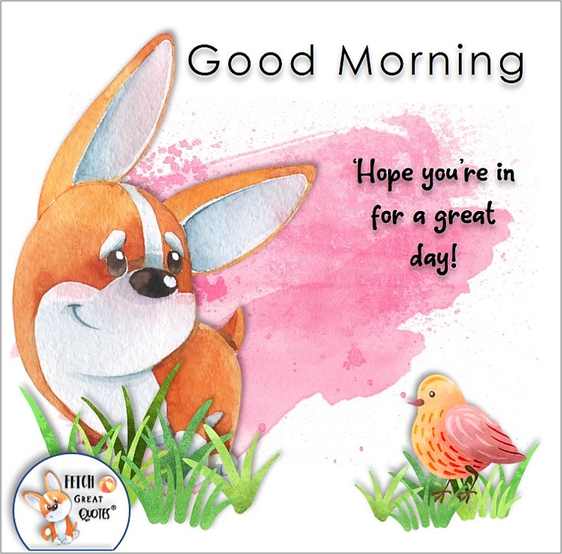corgie dog, cute dog, Hope you're in for a great day!, Whimsical Good Morning photos, cute good morning photo, good morning photos, cartoon good morning photos, humorous good morning photos, funny good morning photos