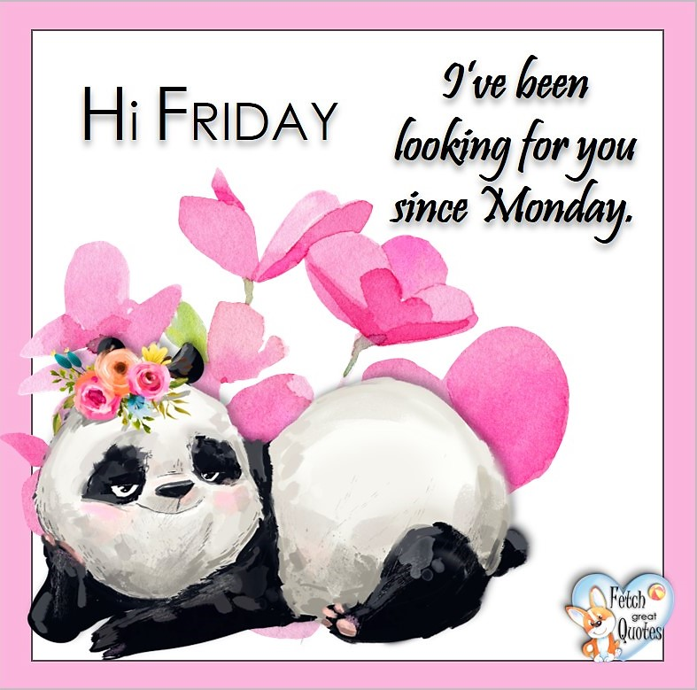 Hi Friday. I've been looking for your since Monday, Free Friday Quotes, Happy Friday Photos, Friday photos, Fun Friday quotes, fun Friday photos