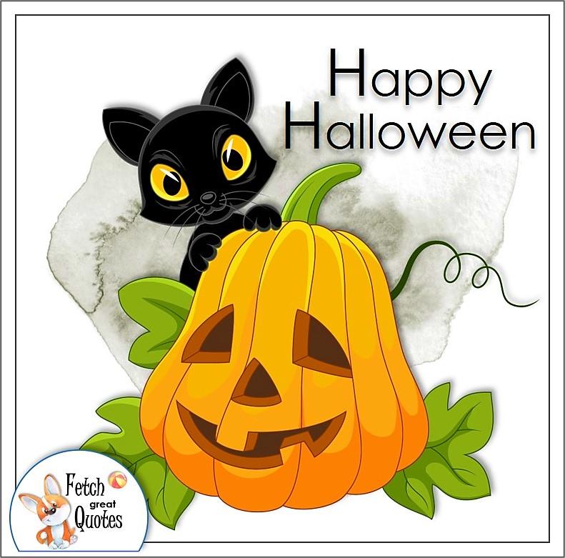 funny Halloween photos, Halloween Pumpkins, sexy witches, cute bats, funny Halloween photos, cute Halloween characters, Happy Halloween, funny holiday greetings, beautiful Halloween photos, fun holiday spirit, whimsical Halloween Photos, favorite Halloween photo, halloween pumpkin, halloween cat, black cat