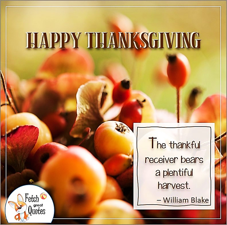 The thankful receiver bears a plentiful harvest. - William Blake, talking turkey, celebrate giving thanks, , gratitude, abundance in our lives, happy Thanksgiving, give thanks, beautiful Happy Thanksgiving photos, Happy Thanksgiving, heartwarming Thanksgiving photos