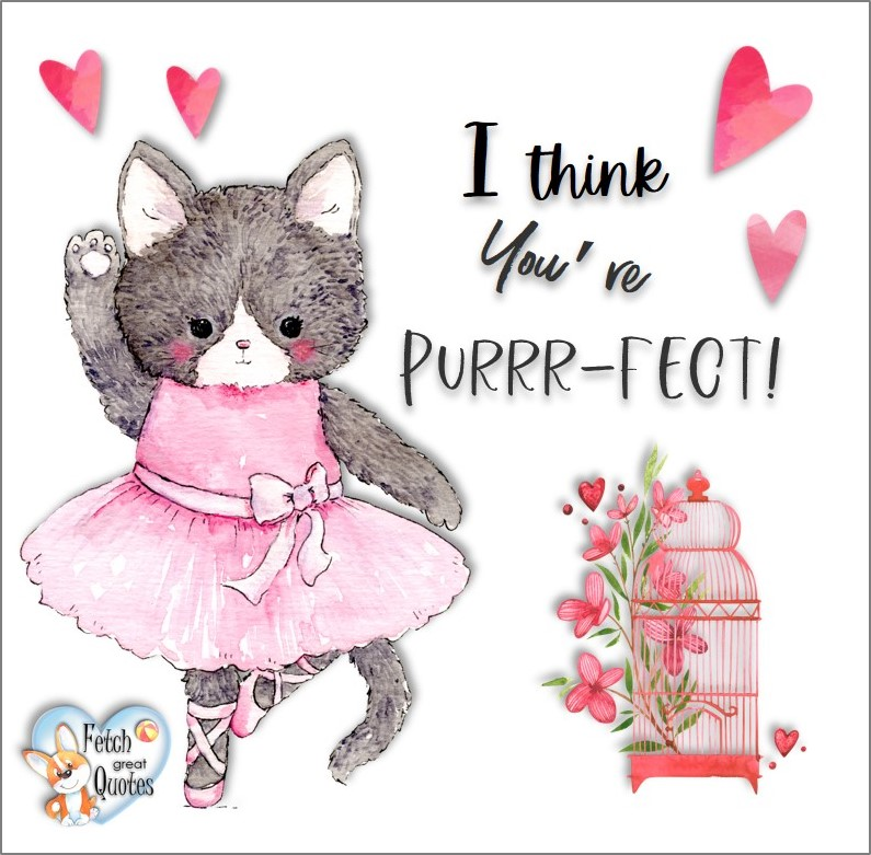 I think you're purrr-fect!, Happy Valentine's Day, Valentine's Day, Valentine greetings, holiday greetings, Valentine's day wishes, cute Valentine's Day photos