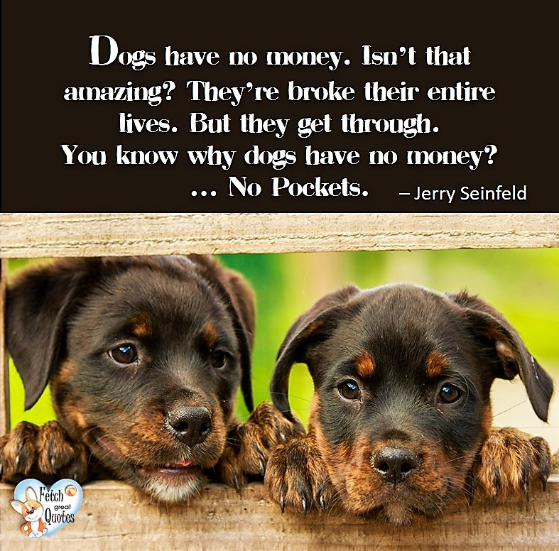 Dogs have no money. Isn't that amazing? They're broke their entire lives. But they get through. You know why dogs have no money? No pockets. - Jerry Seinfeld, Humorous Money and Finance quotes, funny money quotes, funny quotes about money, Money quotes, Favorite Money and finance quotes, financial wisdom, how to talk about financial advice, motivational money quotes, inspire investing and saving, change attitudes towards money, interest in personal finance, financial advice, Favorite Money and finance quotes, financial wisdom, motivational money quotes, Investment Managers, Financial advisors, Insurance Brokers, Credit Coaches