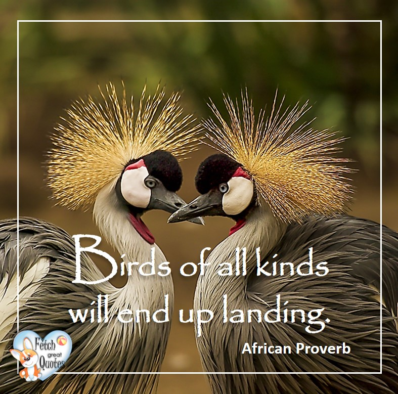 African Proverb, richly illustrated African Proverbs, beautiful African proverb, ancient wisdom, inspirational photo quote, African proverb photo quote, motivational quote, motivational photo quote, Birds of all kinds will end up landing. - African Proverb, African Proverb, richly illustrated African Proverbs, beautiful African proverb, ancient wisdom, inspirational photo quote, African proverb photo quote, motivational quote, motivational photo quote