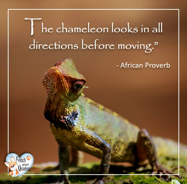 African Proverb, richly illustrated African Proverbs, beautiful African proverb, ancient wisdom, inspirational photo quote, African proverb photo quote, motivational quote, motivational photo quote, The chameleon looks in all directions before moving. - African Proverb