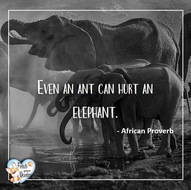 African Proverb, richly illustrated African Proverbs, beautiful African proverb, ancient wisdom, inspirational photo quote, African proverb photo quote, motivational quote, motivational photo quote, Even an ant can hurt an elephant. - African Proverb