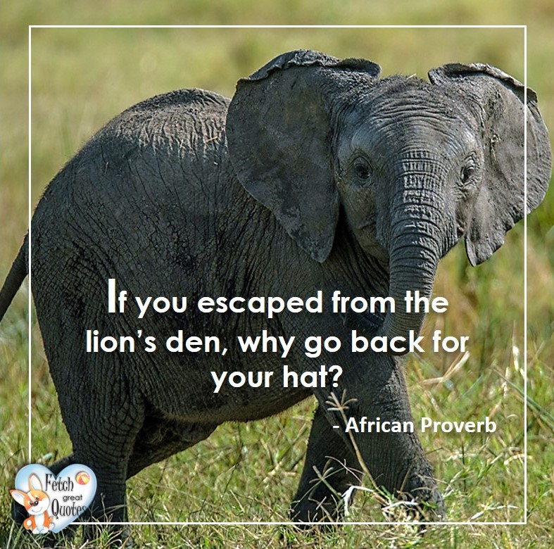 African Proverb, richly illustrated African Proverbs, beautiful African proverb, ancient wisdom, inspirational photo quote, African proverb photo quote, motivational quote, motivational photo quote, If you escaped from the lion's den, why go back for your hat? - African Proverb