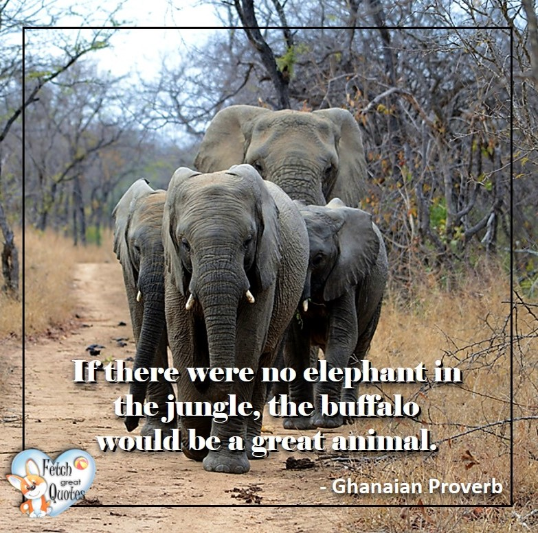 African Proverb, richly illustrated African Proverbs, beautiful African proverb, ancient wisdom, inspirational photo quote, African proverb photo quote, motivational quote, motivational photo quote, If there were no elephant in the jungle, the buffalo would be a great animal. - African Proverb