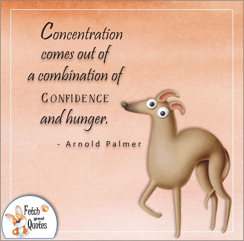 funny dog, self-confidence quote, Concentration comes out of a combination of confidence and hunger. , - Arnold Palmer quote