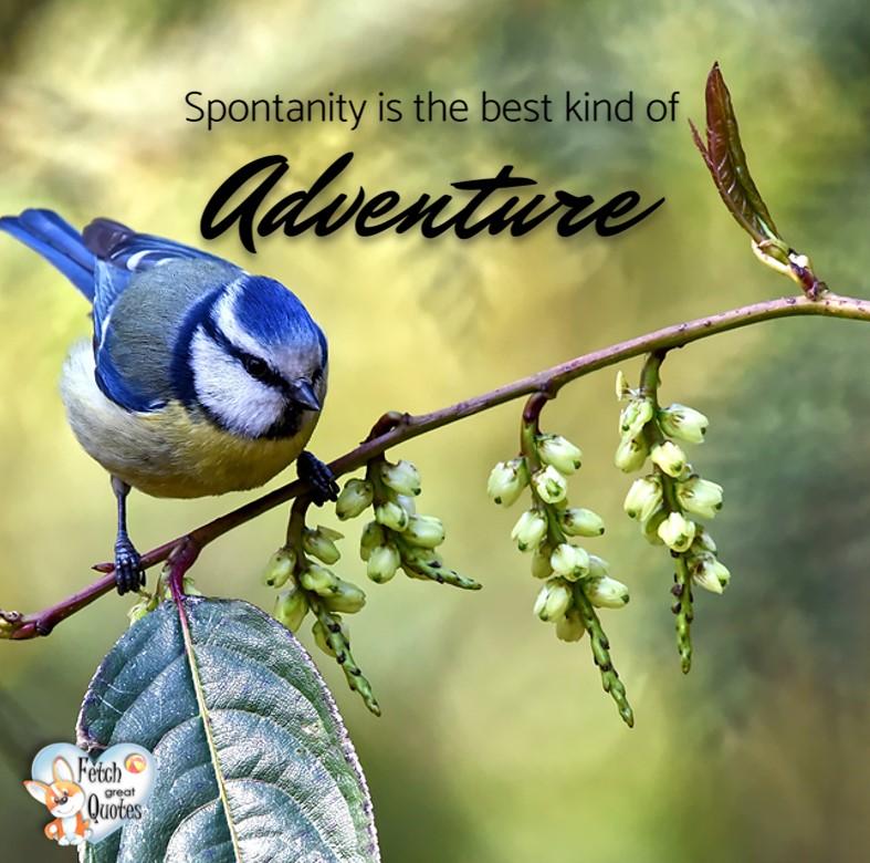 Spontanity is the best kind of adventure. , Inspirational Quotes, motivational quotes, inspirational photo quotes, inspirational photos, motivational photo quotes, success, success quotes, success photos, wildlife photos