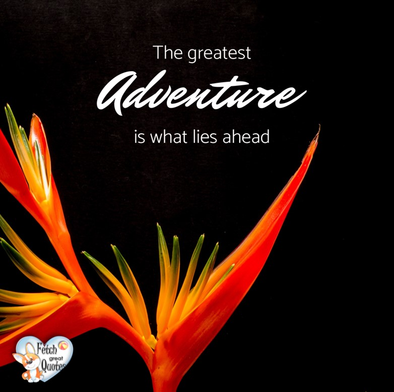 The greatest adventure is what lies ahead., Inspirational Quotes, motivational quotes, inspirational photo quotes, inspirational photos, motivational photo quotes, success, success quotes, success photos, wildlife photos