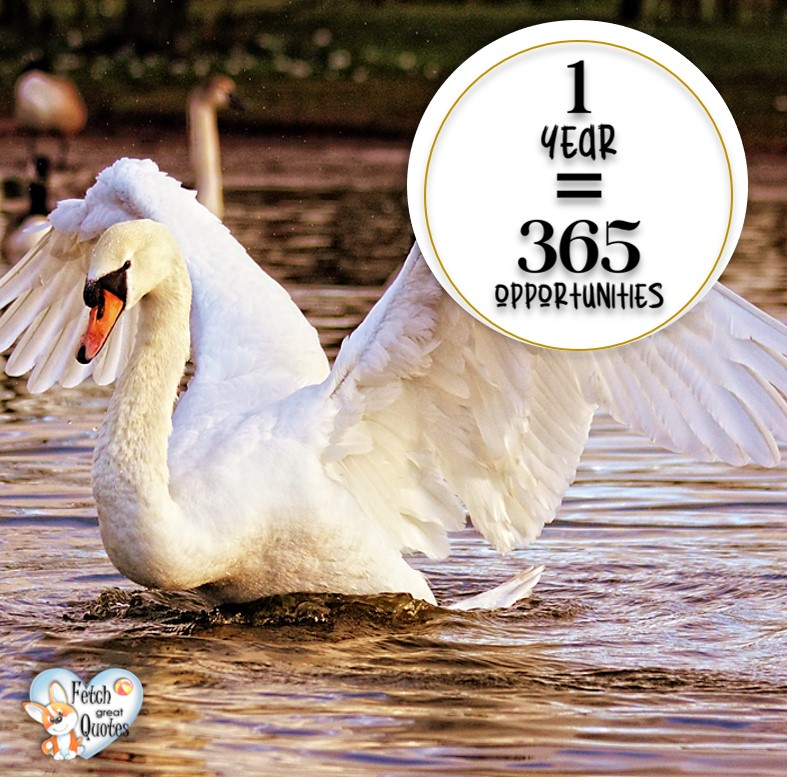 One year equals 365 opportunities., Inspirational Quotes, motivational quotes, inspirational photo quotes, inspirational photos, motivational photo quotes, success, success quotes, success photos, wildlife photos