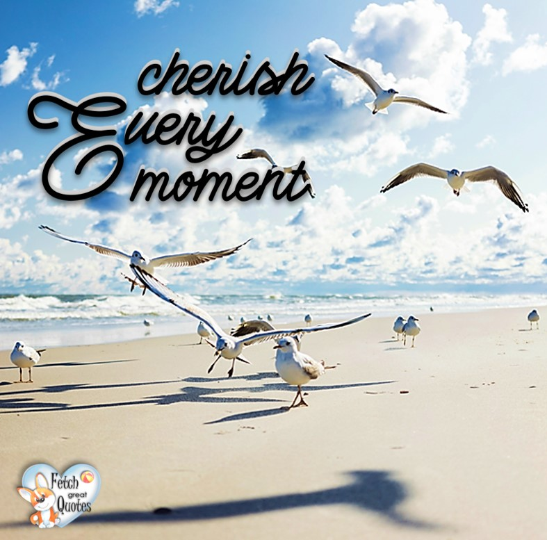 Cherish every moment., Inspirational Quotes, motivational quotes, inspirational photo quotes, inspirational photos, motivational photo quotes, success, success quotes, success photos, wildlife photos
