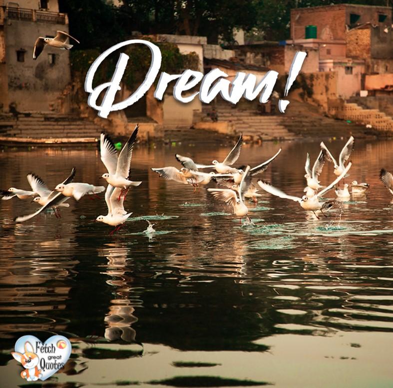 Dream! , Inspirational Quotes, motivational quotes, inspirational photo quotes, inspirational photos, motivational photo quotes, success, success quotes, success photos, wildlife photos