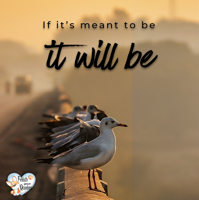 If it's meant ot be it will be. , Inspirational Quotes, motivational quotes, inspirational photo quotes, inspirational photos, motivational photo quotes, success, success quotes, success photos, wildlife photos